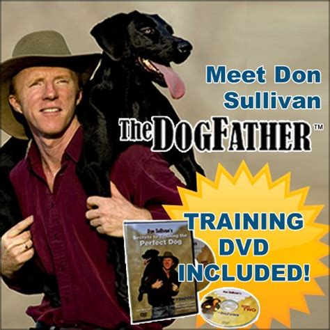 don sullivan don sullivan command collar with links and dvd large misc in the