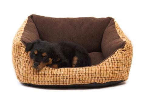 what bed should i buy your what type of bed should i buy for my new puppy