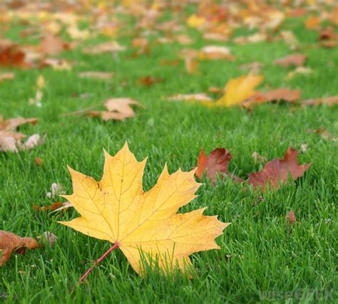 Why Do Trees Shed Their Leaves In Autumn by Why Do Some Trees Lose Their Leaves With Pictures