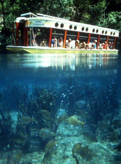 glass bottom boat tours everglades florida memory visitors aboard the quot chief coahajo quot glass
