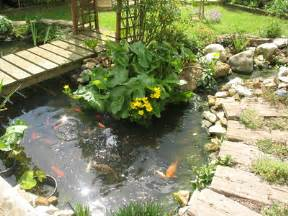 garden fish a guide to pond fish and how to care for them