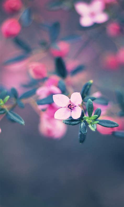 themes cute for nokia nokia lumia 1020 wallpaper blackberry themes