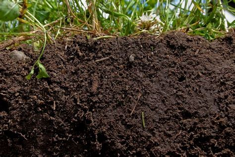Tipi Di Terreni by Tipi Di Terreno Tecniche Di Giardinaggio Composizione