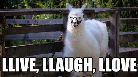 Llama Meme - 15 llamas showing you how to win at llife