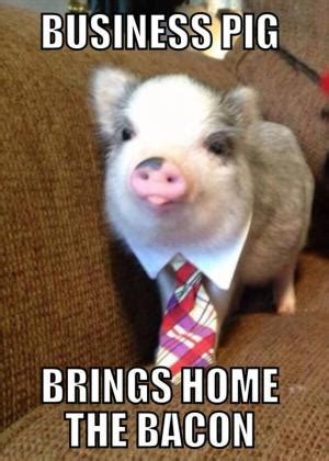 Piglet Meme - pig puns kappit