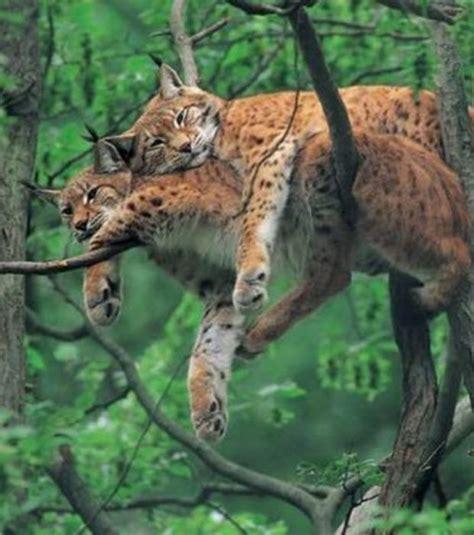 imagenes tiernas de amor con animales hermosas im 225 genes para descargar gratis de animales en