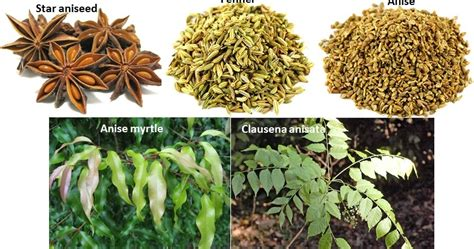 Minyak Atsiri Bunga Kamboja essential corner engineered essential