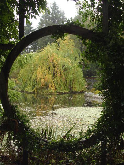 garden housecalls weeping katsura tree