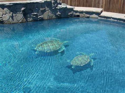 Realistic Wall Murals changing the look of swimming pools 3d ceramic tile art