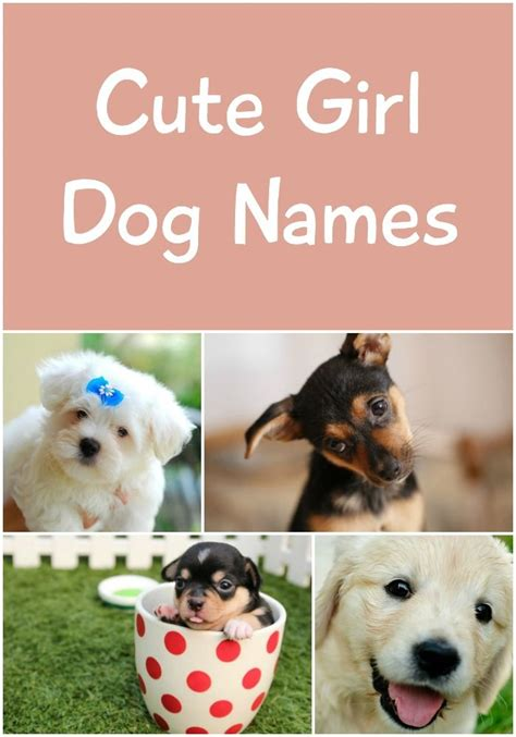 baby puppy names 58 best images about names on names baby names and baby