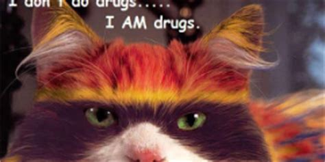 Pussy Cat Meme - are you high