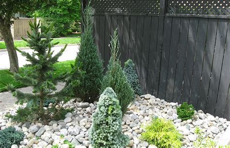 landscaping with conifers garden colormag