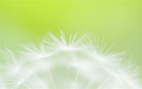 wallpaper soft green green flower soft focus photography wallpaper 3618