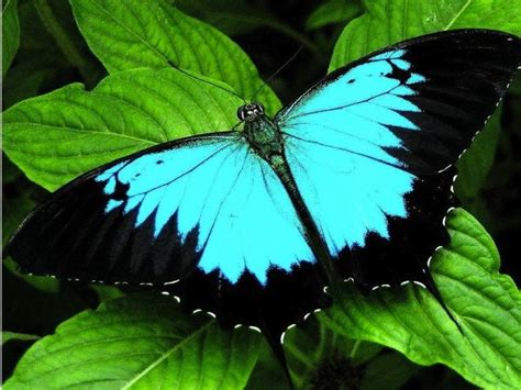Beautiful Butterfly beautiful butterflies from around the world
