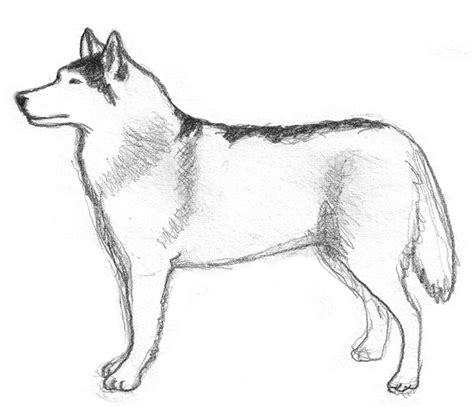 Drawing Dogs by Sketches Pencil Drawings Of Dogs