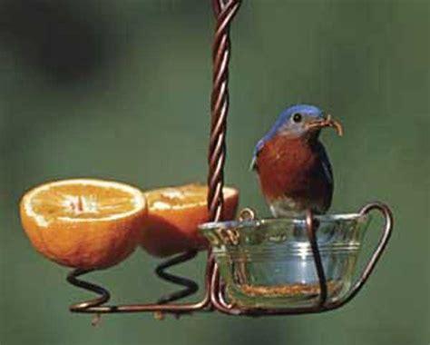 bird feeder fruit bird feedersbird feeders