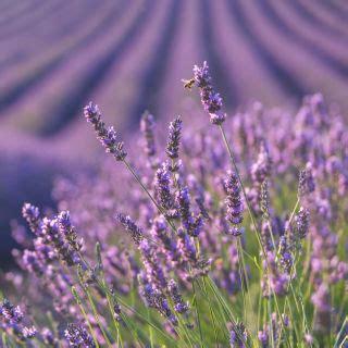 rebecca shinners country living floret flower farm beautiful flower arrangements