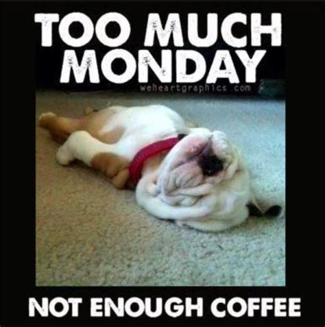 Too Much Coffee Meme - 1000 images about funny animals on pinterest funny