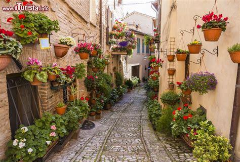 immagini di fiori e piante vicolo addobbato con fiori e piante a spello foto