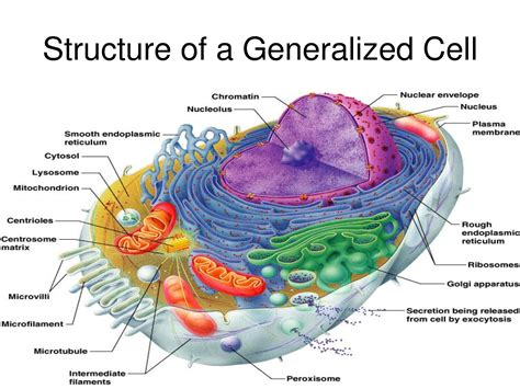 cell dr odd sujeto  celula pinterest cell