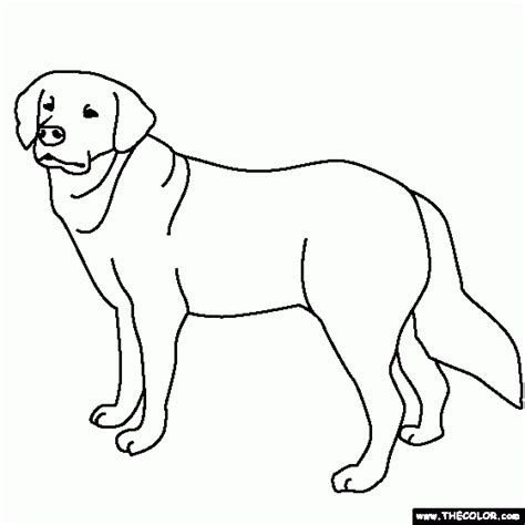 golden retriever puppy coloring pages free coloring