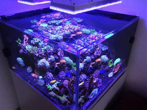 Lu Led Aquarium Murah Apa Aquarium Lu Led Yang Saya Pilih Untuk Akuarium Saya Orphek