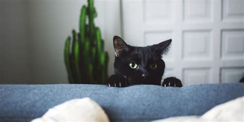 How To Prevent Cat From Scratching by Why Cats Scratch Furniture How To Stop Cats From