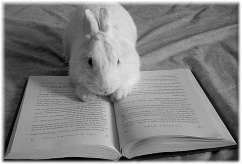 rabbits picture book reading bunny by possumsgurl on deviantart