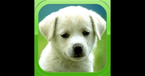 puppy app puppy wallpapers puppy pictures images on the app store