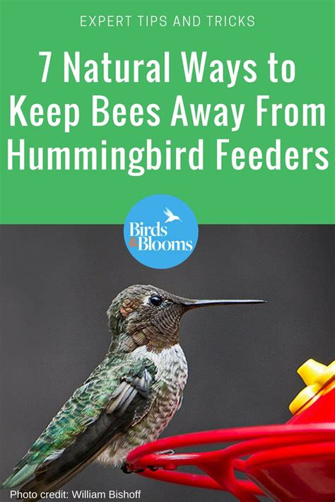 best 25 hummingbirds ideas on pinterest hummingbird