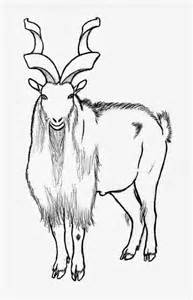 markhor coloring coloring page coloring pages california