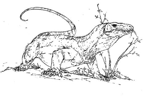 free coloring pages of komodo dragon