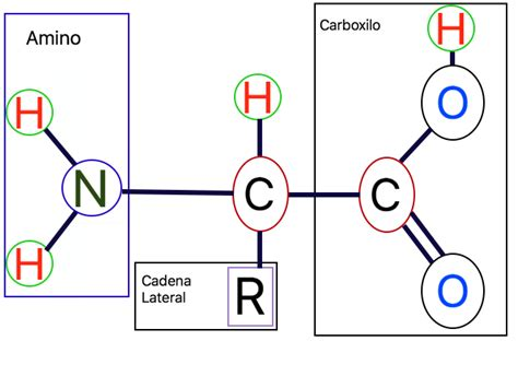 proteinas y su estructura prote 237 nas qu 233 su estructura y mucho m 225 s prote 237 nas