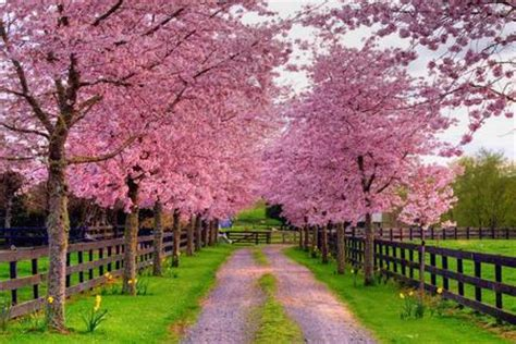 pretty trees pretty in pink other nature background wallpapers on