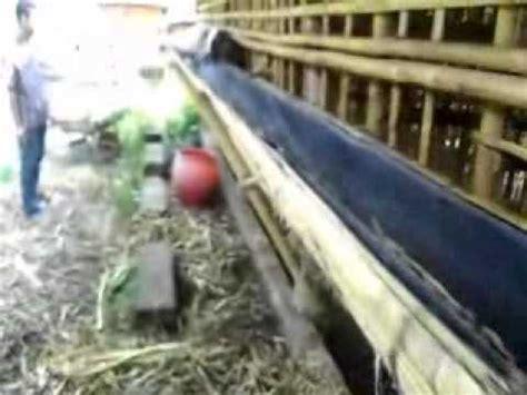 Budidaya Usaha Pengolahan Agribisnis Ternak Domba cara ternak ayam pakan ternak kambing organik