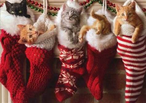 kittens  christmas stocking box   avanti cat christmas cards ebay
