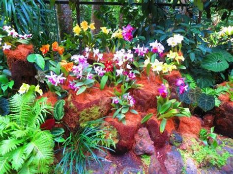 the orchid shade house picture of singapore botanic