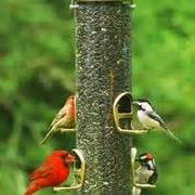 asheville wild birds unlimited pet stores 10 crispin