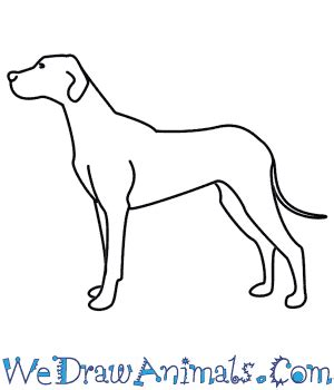 pictures of dogs to draw pictures how to draw a drawings gallery