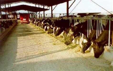 manejo de instalaciones para 8415848722 bovinos manejo