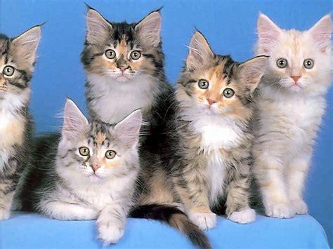 imagenes artisticas de gatos im 225 genes con gatitos hermosos