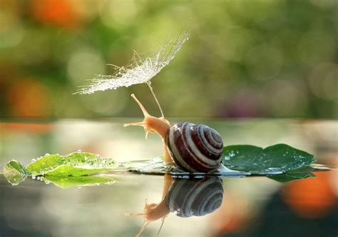 Macro Me - a magical miniature world of snails by vyacheslav