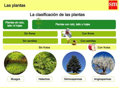 olguchiland las plantas ii tengo una corazonada tema 1 las plantas clasificaci 243 n 5 186