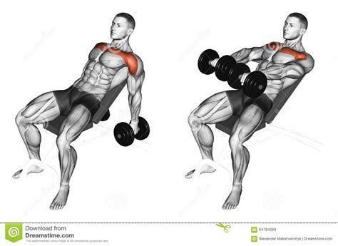 incline bench muscles worked exercising lifting dumbbell in hand to lean forwa stock