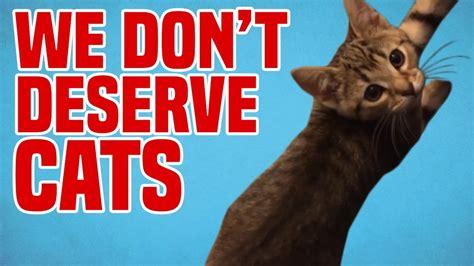 we don t deserve cats funny cat fails 1funny com