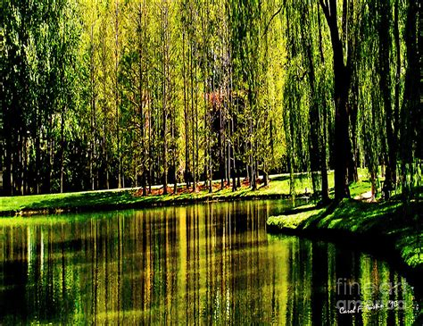 House Decor App by Weeping Willow Tree On Lakeside Photograph By Carol F Austin
