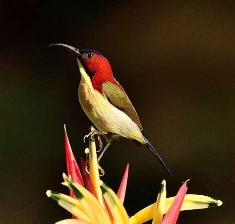 On Lovely by Lovely Sunbird