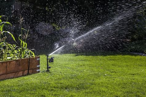 how to get rid of raccoons in my backyard how to get rid of raccoons with a motion activated sprinkler my review
