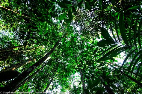 Trees With Canopy Tropical Rainforest Biome Adventure Roxym304
