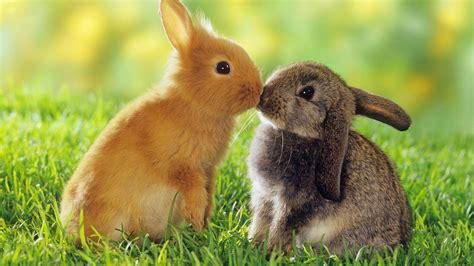 black and white rabbit wallpaper cute black bunny hd wallpaper 34 desktop background